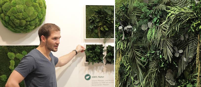 Grüne Pflanzen hängen an der Wand (Quadratische Form) eines Messestandes auf der Ambiente Trend Tour in Frankfurt.