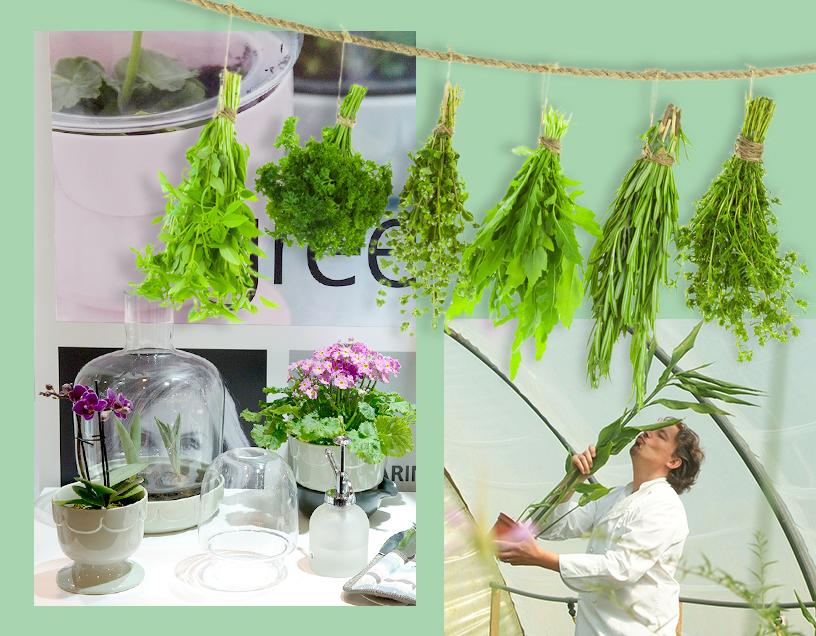 Cuisine-gift-cookery-nature-household-garden-1