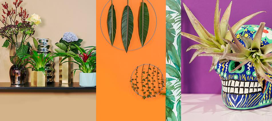 Dekoration-Accessoires-Wohnen-Interior-Pflanzen