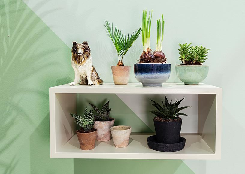 Pflanzen-Harmonis-Interior-Trend-Holz