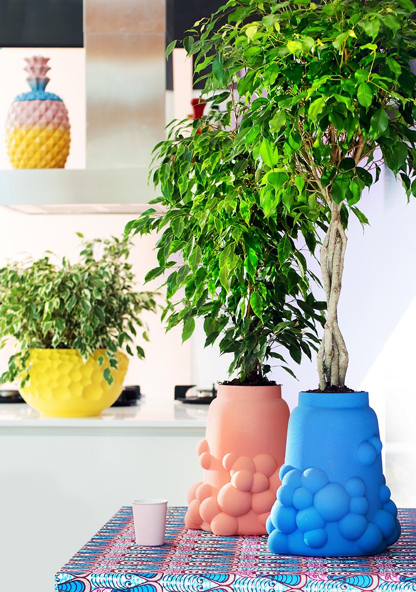 Rebel-Ficus Benjamina-Pflanzen-bunt-Interior