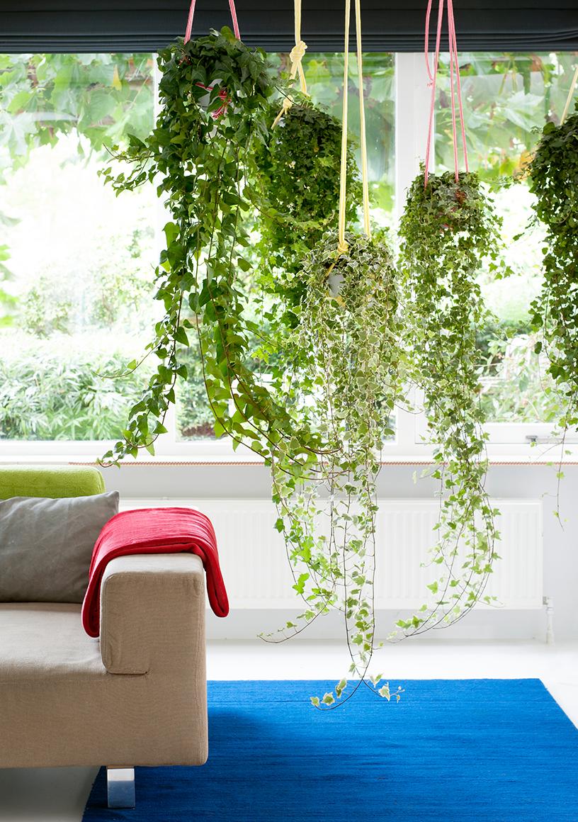 Zimmerpflanzen-Interior-Wohnen-Trend