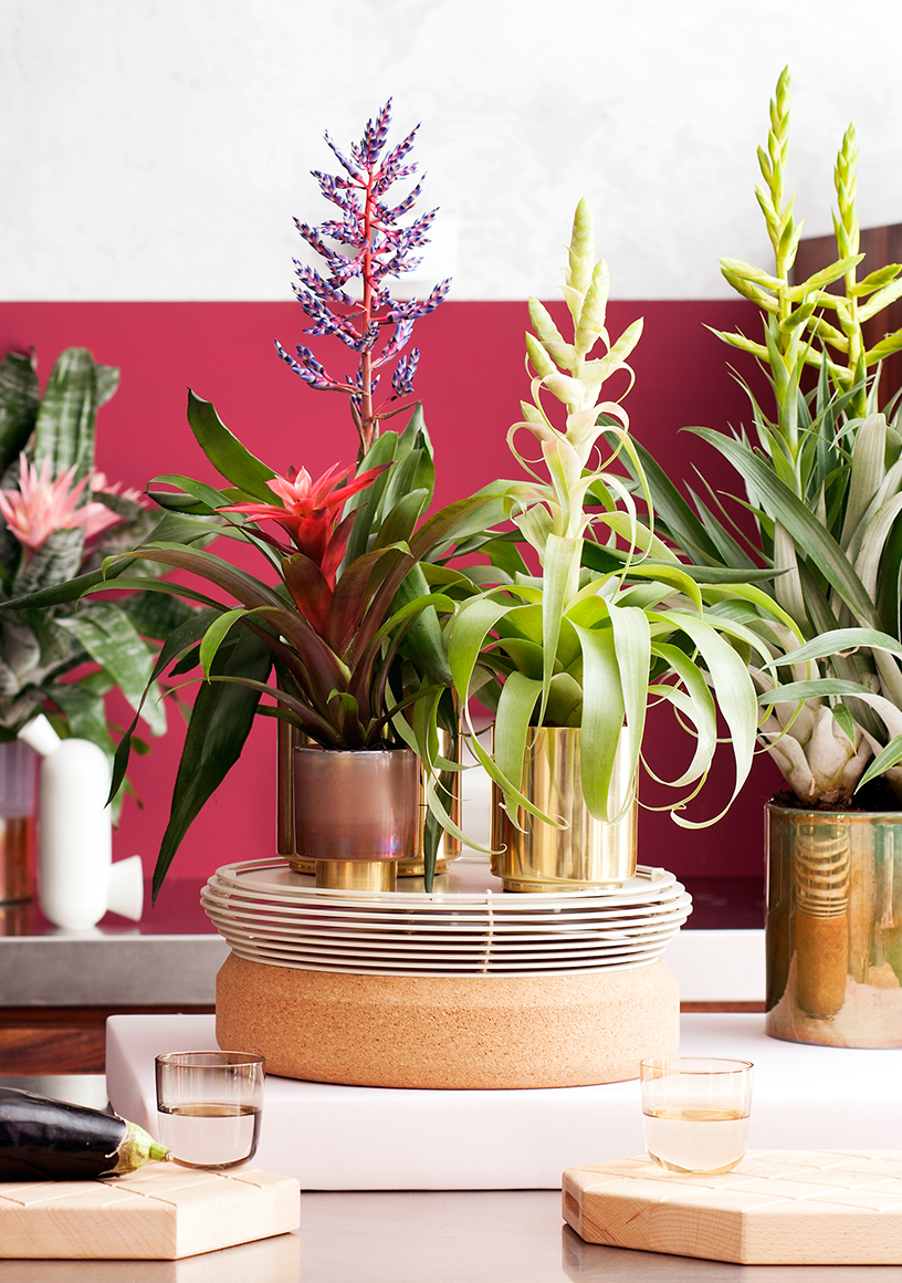 masculine-welcoming-rooms-plants-trend