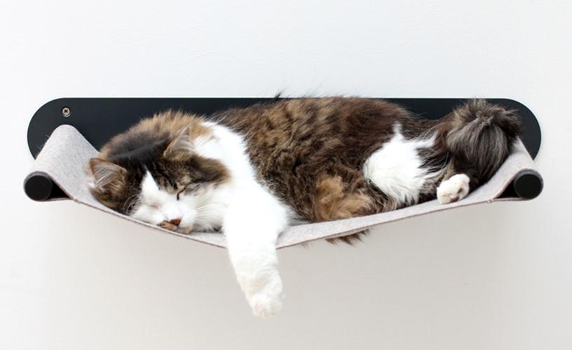 Hallo Ralf Schlafende Katze auf der Hängematte von Design Sebastian Frank