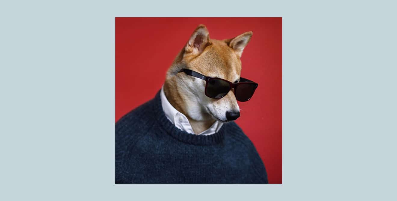 Instagram photo of the mensweardog, the dog who wears mens' fashion