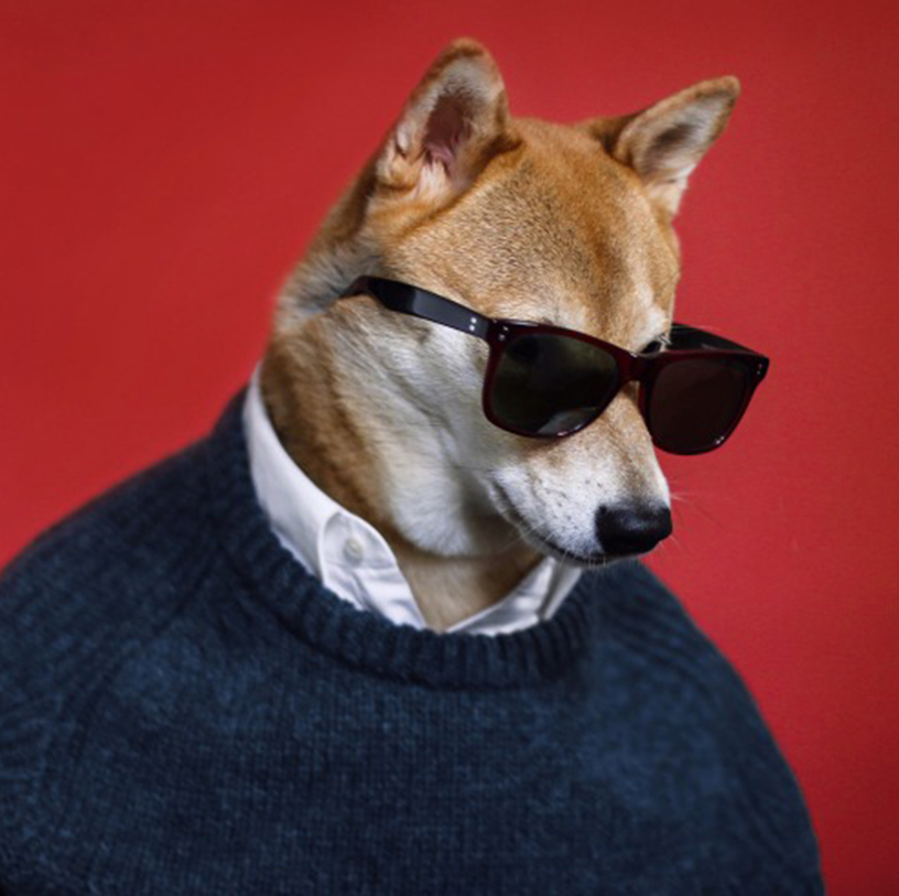 Instagram photo of the mensweardog, the dog who wears mens' fashion