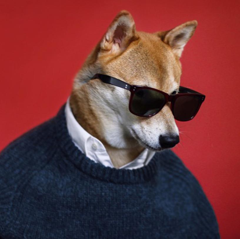 Instagram-Foto vom Mensweardog, dem Hund, der modische Männerkleidung trägt