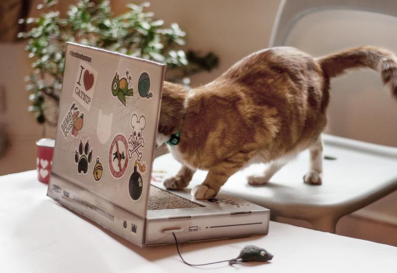 """Katze spielt mit dem """"Cat Scratch Laptop"""", einem Kratzobjekt in der Form eines Laptops aus der Cat Playhouse Serie von Suck UK"""