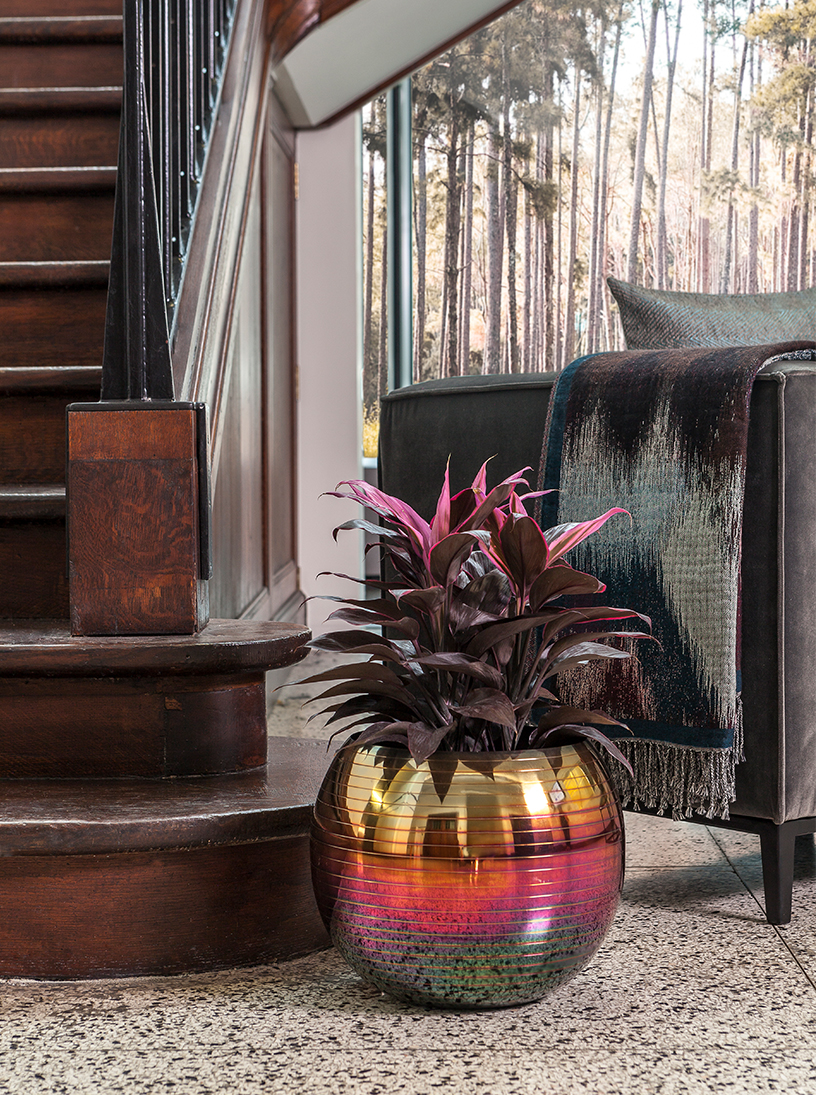 Dark Calathea in a colourful pot standing in a living room by Dome Deco
