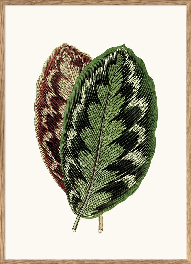 Exotische Blätter als gerahmter Print von Dybdahl