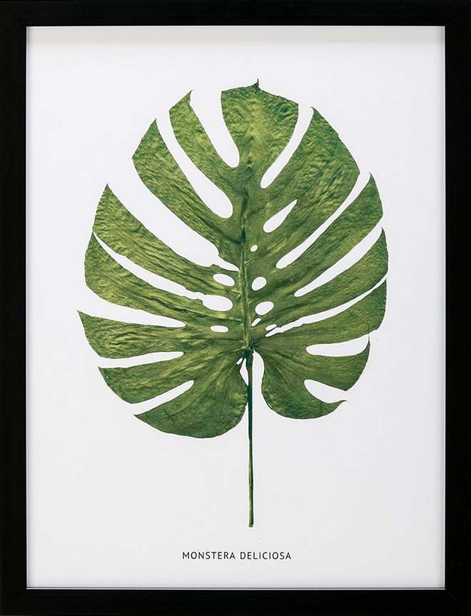 A leaf of Monstera Deliciosa in front of a white background and a black frame by G&C Interiors