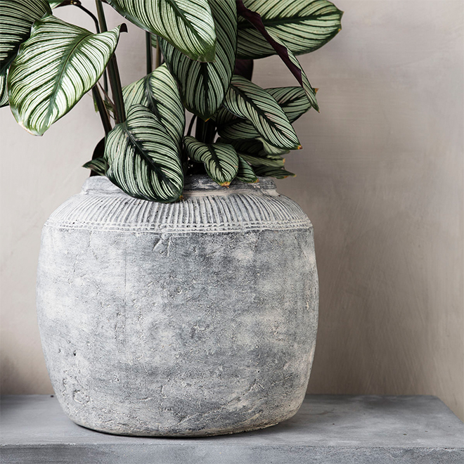 A concrete pot by House Doctor with a Calathea plant in it