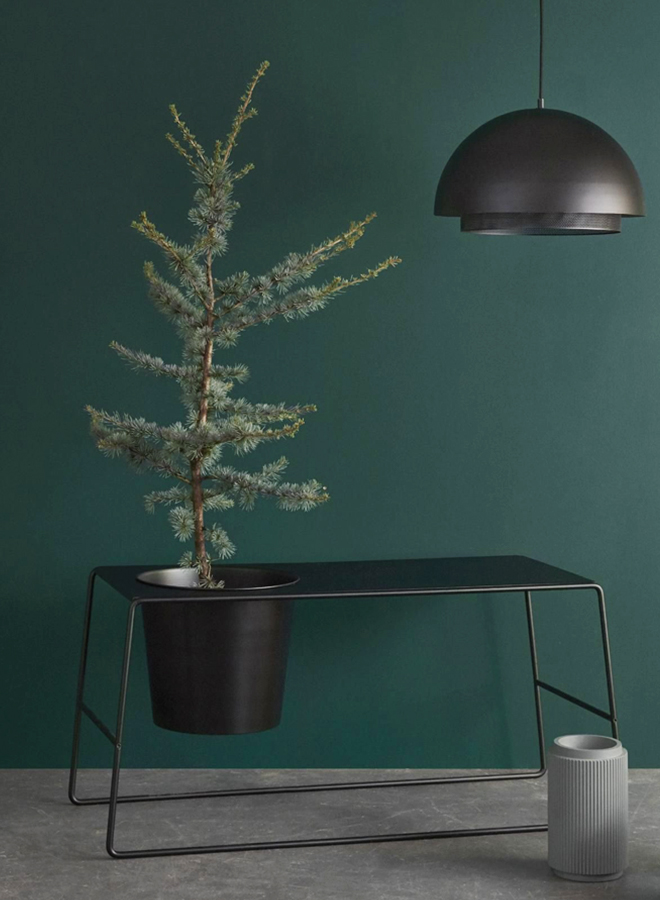 A small conifer in a plantbank in front of a darkish green wall by Hübsch