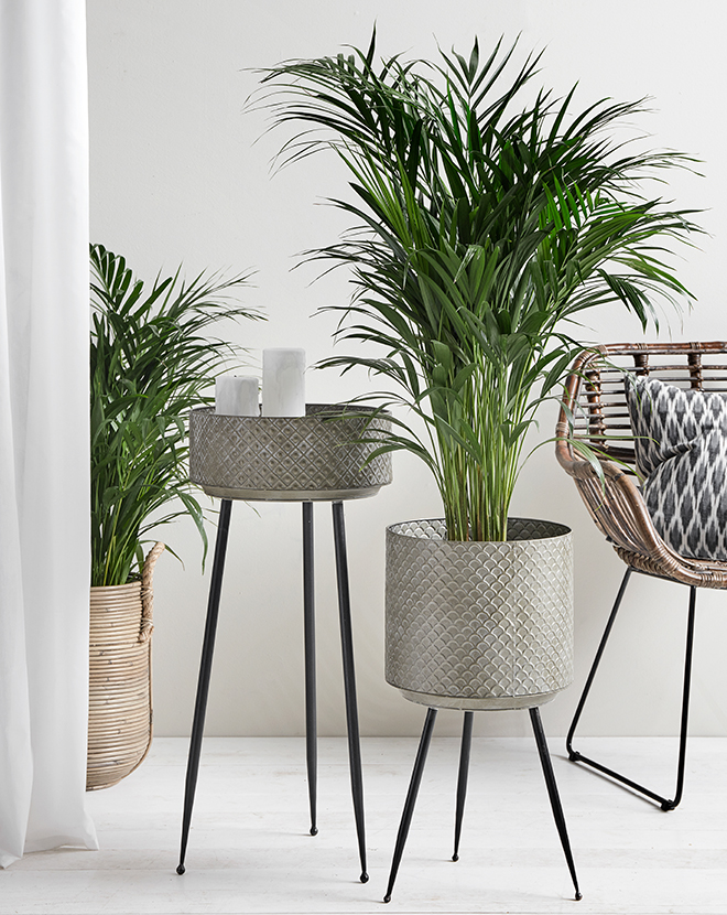 areca palm in a plant pot with rack in front of decorations by Nordal