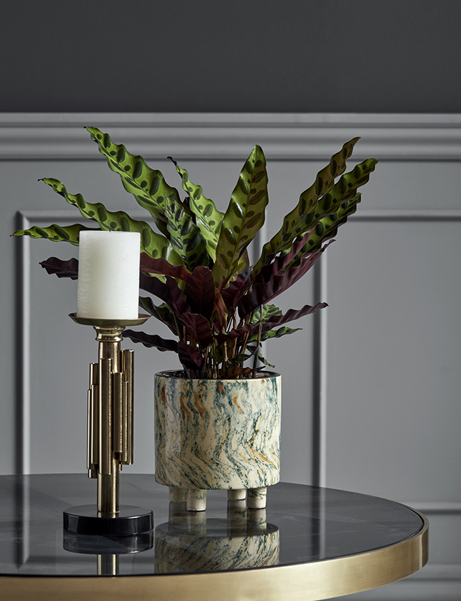green Calathea in marble pot on a table by Nordal