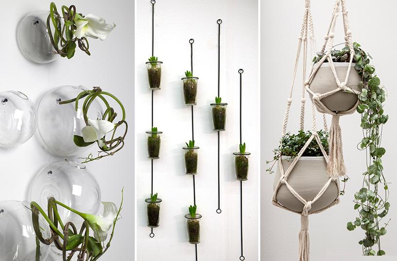 Serax-Zimmerpflanzen-Blumenampe-Mauerblümchen-01